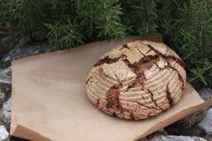 Βιο ολόκληρο ψωμί σιταριού στοκ φωτογραφία με δικαίωμα ελεύθερης χρήσης