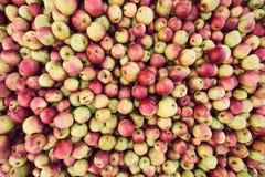 Βιο συγκομιδή μήλων Στοκ φωτογραφία με δικαίωμα ελεύθερης χρήσης