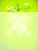 Βιο eco σχεδίου έννοιας φιλικό για το θερινό floral έμβλημα Στοκ Φωτογραφίες