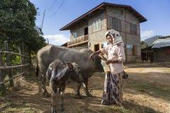 Βιρμανίδα ανώτερη γυναίκα που μεταχειρίζεται το δέρμα νερού της buffaloes' με το πετρέλαιο Στοκ Εικόνες