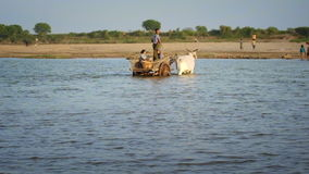 Βιρμανοί τοπικοί λαοί που διασχίζουν το κοπάδι ποταμών Irrawaddy που οδηγεί το ξύλινο κάρρο απόθεμα βίντεο