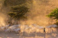 Βιρμανός shepherdess στη σκόνη Στοκ Φωτογραφία