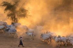 Βιρμανός shepherdess στη σκόνη Στοκ Εικόνες