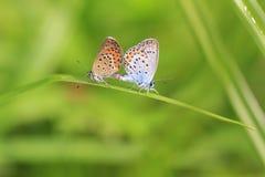 βιότοπος πεταλούδων φυ&sigm Στοκ φωτογραφία με δικαίωμα ελεύθερης χρήσης