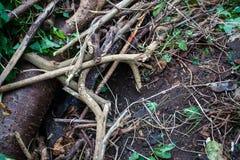 Βιότοπος σκαντζόχοιρων στο ξύλο στοκ εικόνα