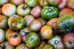 Βιώσιμη καλλιέργεια στη νότια Φλώριδα Στοκ Εικόνες