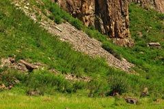 βλάστηση βράχου Στοκ εικόνες με δικαίωμα ελεύθερης χρήσης
