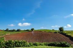 Βλάστηση καλλιεργήσιμου εδάφους στους λόφους στοκ φωτογραφίες με δικαίωμα ελεύθερης χρήσης
