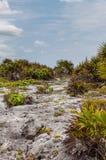 Βλάστηση παραλιών σε Tulum Στοκ Φωτογραφίες