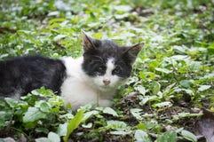 Βλαμμένο περιπλανώμενο γατάκι μόνο Στοκ Φωτογραφίες