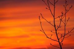 Βλαστάνοντας δέντρο στην αρχή της άνοιξης στοκ εικόνες