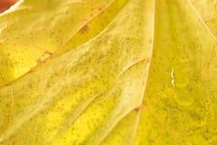 Βλασταίνοντας φύλλα Κινηματογράφηση σε πρώτο πλάνο με τη θαμπάδα και το φως του ήλιου Στοκ Φωτογραφία
