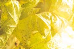 Βλασταίνοντας φύλλα Κινηματογράφηση σε πρώτο πλάνο με τη θαμπάδα και το φως του ήλιου Στοκ Φωτογραφίες