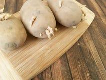 Βλαστημένες πατάτες, ξύλινος βολβός βλάστησης Στοκ φωτογραφίες με δικαίωμα ελεύθερης χρήσης