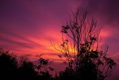 Βλαστημένο δέντρο με την πυράκτωση ηλιοβασιλέματος στοκ εικόνες