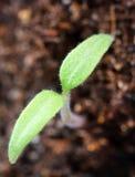 βλαστοί φυτών στοκ φωτογραφία