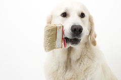 βοήθεια σκυλιών Στοκ φωτογραφία με δικαίωμα ελεύθερης χρήσης