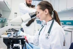Βοηθητικό και κτηνιατρικό δείγμα ιστών εξέτασης εργαστηρίων από το εναλλασσόμενο ρεύμα Στοκ Εικόνες