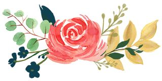 Βοημίας εκλεκτής ποιότητας χλωρίδας Watercolor αυξήθηκε peony αφηρημένο λουλούδι arr απεικόνιση αποθεμάτων