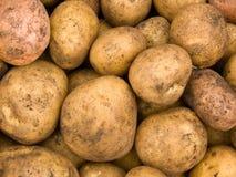 βολβοί πατατών συγκομιδ Στοκ Φωτογραφία