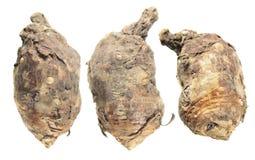 Βολβοί του ιταλικού arum ή του italicum Arum που απομονώνεται στο άσπρο υπόβαθρο Στοκ εικόνες με δικαίωμα ελεύθερης χρήσης