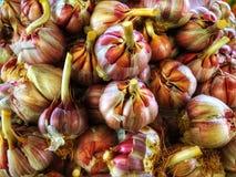 Βολβοί του σκόρδου για την πώληση σε Αγαδίρ, Μαρόκο στοκ εικόνες