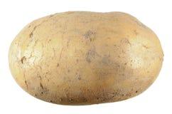 Βολβός πατατών που απομονώνεται στο λευκό Στοκ φωτογραφία με δικαίωμα ελεύθερης χρήσης