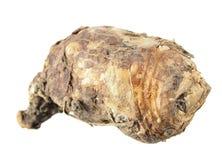 Βολβός του ιταλικού arum ή του italicum Arum που απομονώνεται στο άσπρο υπόβαθρο Στοκ Εικόνα