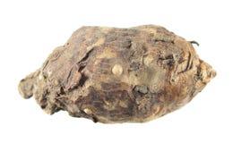 Βολβός του ιταλικού arum ή του italicum Arum που απομονώνεται στο άσπρο υπόβαθρο Στοκ φωτογραφία με δικαίωμα ελεύθερης χρήσης