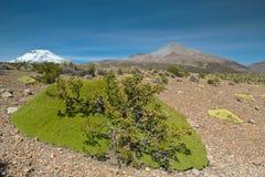 βολιβιανά ηφαίστεια χλόη&sig Στοκ Εικόνα