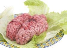 βοοειδές λευκό εγκεφά& στοκ εικόνα με δικαίωμα ελεύθερης χρήσης