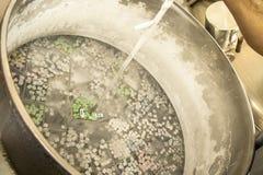 Βοοειδές σπέρμα στοκ φωτογραφίες με δικαίωμα ελεύθερης χρήσης