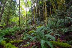 Βορειοδυτικό δάσος στοκ εικόνα με δικαίωμα ελεύθερης χρήσης