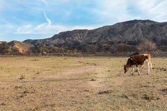 Βοσκή αγελάδων στο λιβάδι ενάντια σε έναν μπλε ουρανό Στοκ Φωτογραφίες