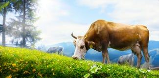 Βοσκή αγελάδων τέχνης σε ένα λιβάδι βουνών  οικολογικό ζωικό κεφάλαιο Στοκ εικόνες με δικαίωμα ελεύθερης χρήσης
