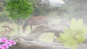 Βοσκή αλόγων σε μια ισχυρή ελαφριά ομίχλη φιλμ μικρού μήκους