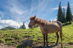 Βοσκή αλόγων σε έναν λόφο βουνών Στοκ εικόνα με δικαίωμα ελεύθερης χρήσης
