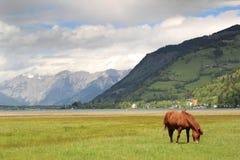 Βοσκή αλόγων στις Άλπεις Στοκ Εικόνα