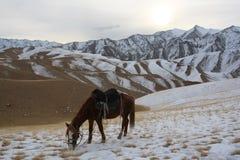 Βοσκή αλόγων του Κιργισίου το χειμώνα στα βουνά Στοκ εικόνα με δικαίωμα ελεύθερης χρήσης