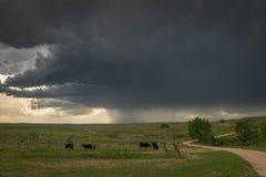 Βοσκή βοοειδών στις πεδιάδες του Ουαϊόμινγκ κάτω από το δραματικό ουρανό με την προσέγγιση καταιγίδας στοκ φωτογραφία με δικαίωμα ελεύθερης χρήσης