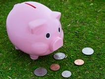 βοσκή τραπεζών piggy Στοκ Φωτογραφία