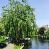 Βοστώνη κοινή και λίμνη βατράχων Στοκ Φωτογραφίες