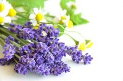 Βοτανικά λουλούδια Στοκ εικόνα με δικαίωμα ελεύθερης χρήσης