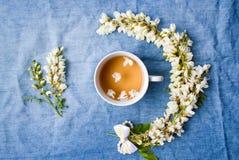 Βοτανικά τσάι και λουλούδια ακακιών Στοκ φωτογραφίες με δικαίωμα ελεύθερης χρήσης