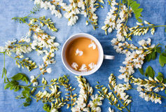 Βοτανικά τσάι και λουλούδια ακακιών Στοκ Εικόνες