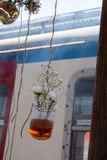 Βοτανική ένωση μπουκαλιών τσαγιού στη σειρά Στοκ φωτογραφίες με δικαίωμα ελεύθερης χρήσης