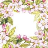 Βοτανική απεικόνιση πλαισίων της Apple Σχέδιο καρτών με τα λουλούδια και το φύλλο μήλων Watercolor απεικόνιση που απομονώνεται βο Στοκ εικόνες με δικαίωμα ελεύθερης χρήσης