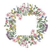Βοτανική απεικόνιση watercolor του πλαισίου wildflowers διανυσματική απεικόνιση