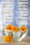 Βοτανική ιατρική - nasturtium arvense φλυτζανιών equisetum εστίασης naturopathy εκλεκτικό τσάι έγχυσης αλογουρών γυαλιού βοτανικό Στοκ Εικόνα