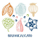 Βοτανική κάρτα Διανυσματική απεικόνιση